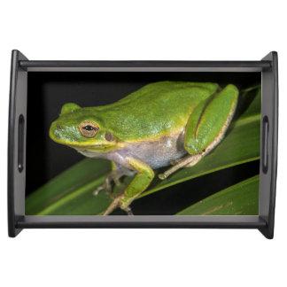 Green Tree Frog (Hyla cinerea) 2 Serving Tray