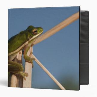 Green Tree Frog Hyla cinerea) Little St 3 Ring Binder