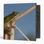 Green Tree Frog Hyla cinerea) Little St Binder