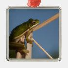 Green Tree Frog Hyla cinerea) Little St Metal Ornament