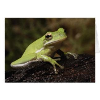 Green Tree Frog, Hyla cineria, Greeting Card