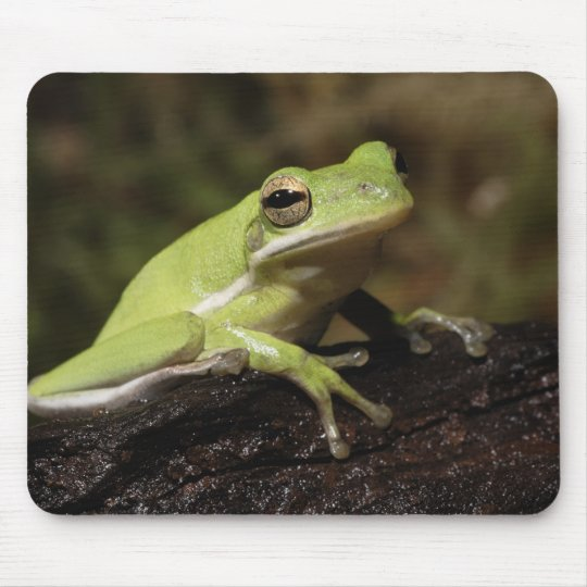 Green Tree Frog, Hyla cineria, Mouse Pad