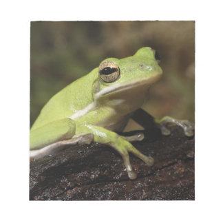 Green Tree Frog, Hyla cineria, Notepad