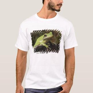 Green Tree Frog, Hyla cineria, T-Shirt
