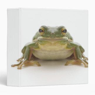 Green tree frog (Hylidae cinerea) 3 Ring Binder