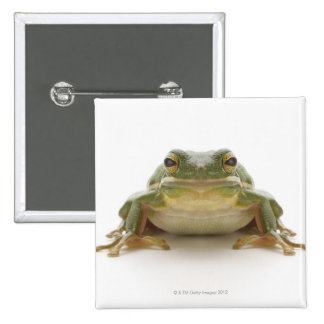 Green tree frog (Hylidae cinerea) 2 Inch Square Button