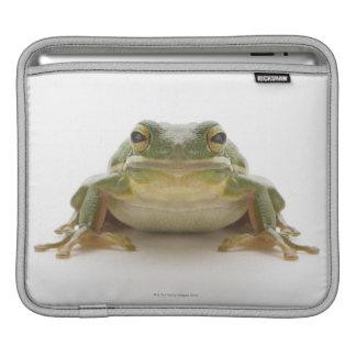 Green tree frog (Hylidae cinerea) iPad Sleeve