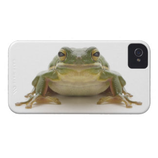 Green tree frog (Hylidae cinerea) iPhone 4 Case