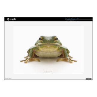 Green tree frog (Hylidae cinerea) Laptop Skin