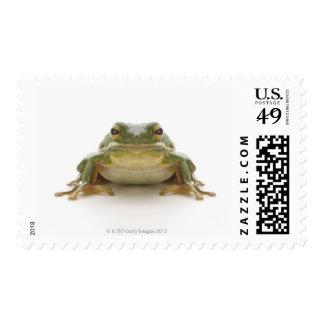 Green tree frog (Hylidae cinerea) Postage