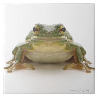Green tree frog (Hylidae cinerea) Tile