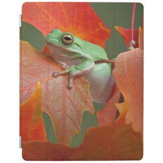 Green Tree Frog In Fall iPad Cover