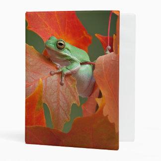 Green Tree Frog In Fall Mini Binder