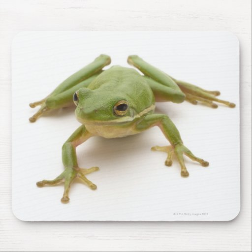 Green Tree Frog Mouse Pad