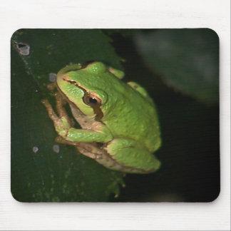 Green Tree Frog Mousepad
