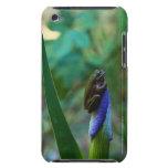 Green Tree Frog on Iris Barely There iPod Cover