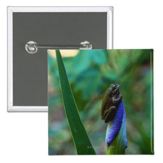 Green Tree Frog on Iris 2 Inch Square Button