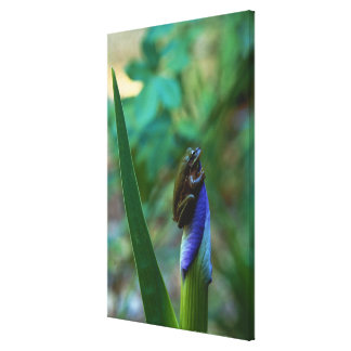 Green Tree Frog on Iris Gallery Wrapped Canvas