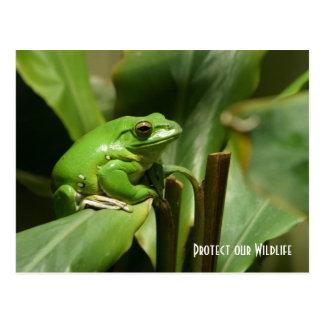 Green Tree Frog Post Card