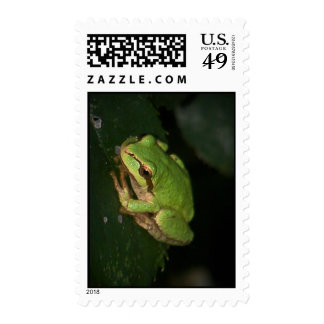 Green Tree Frog Postage