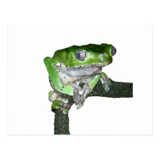 green tree frog post card