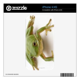 Green Tree Frog iPhone 4 Skins
