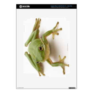 Green Tree Frog Skins For iPad 3