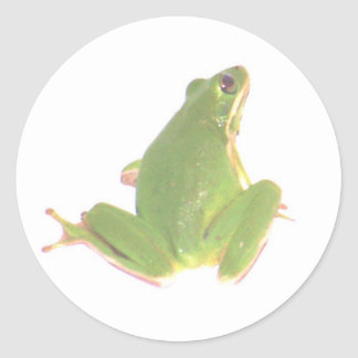 Green Tree Frog Sticker - Small