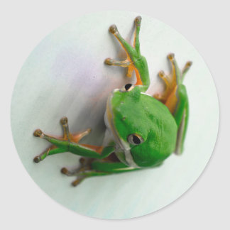 Green Tree Frog Stickers - many shapes available