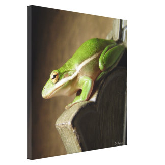 Green tree frog Stretched Canvas Print