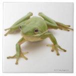 Green Tree Frog Tile
