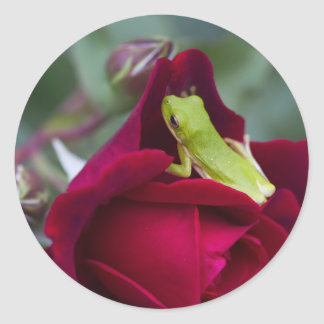 Green Tree Frogs and Red Roses Classic Round Sticker
