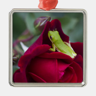 Green Tree Frogs and Red Roses Metal Ornament