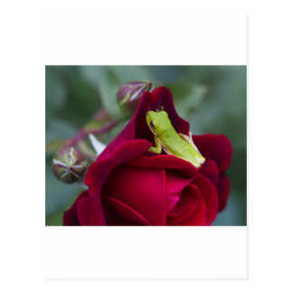 Green Tree Frogs and Red Roses Postcard