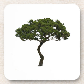 Green tree informal upright photograph coaster