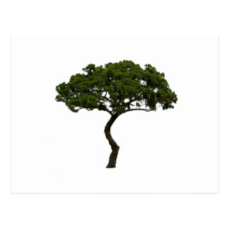 Green tree informal upright photograph postcard