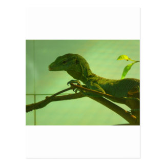green tree monitor postcard