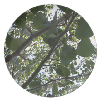 Green Tree Photography Plate