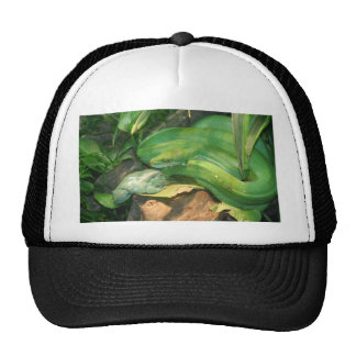 Green Tree Python and White s Tree Frog Hats