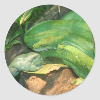Green Tree Python, and White's Tree Frog Round Stickers