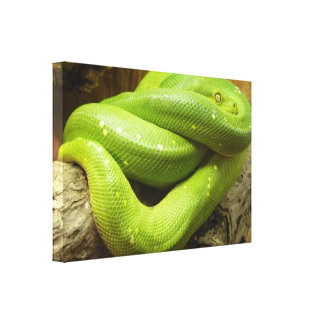 Green Tree Python Canvas Print