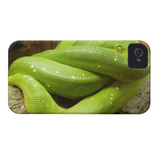 Green Tree Python Case-Mate iPhone 4 Case