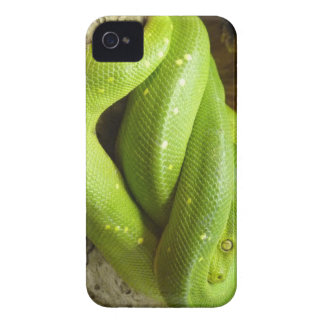Green Tree Python iPhone 4 Case-Mate Cases