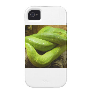 Green Tree Python Case-Mate iPhone 4 Cases
