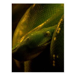 green tree python eye postcard