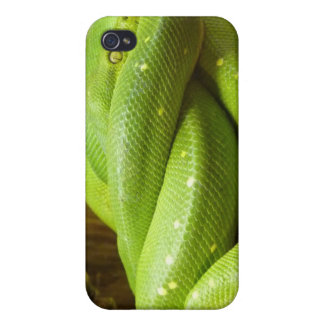 Green Tree Python iPhone 4/4S Cases
