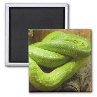 Green Tree Python Refrigerator Magnets