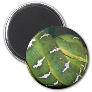 Green Tree Python Refrigerator Magnet