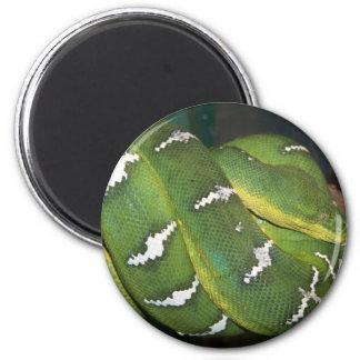 Green Tree Python Fridge Magnet