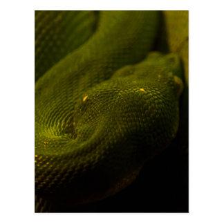 green tree python postcard